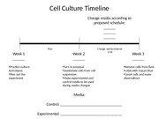 Cell Culture Timeline