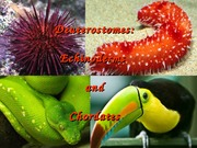 Lecture 23 - Echinoderms and Chordates