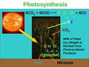 photosynthesis.new