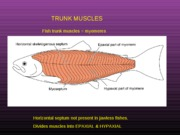 L 16 axial & limb muscles