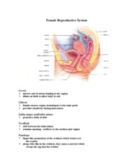 Female Reproductive notes