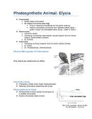 Photosynthetic Animal Notes