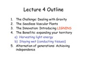 Lecture4 Seedless Vascular Plants