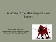 Lecture 21 Male Reproductive System-1