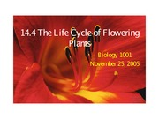 14.4 Life Cycle Flowering Plants November 25