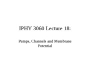 Lecture 17 Pumps, Channels, and Membrane Potential