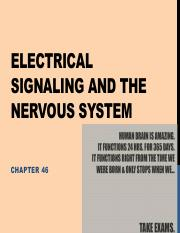 Lecture 20 - Electrical signaling and the nervous system.pdf
