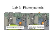 Lab 6 Photosynthesis