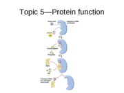 Topic 5, protein functions.ppt.edu