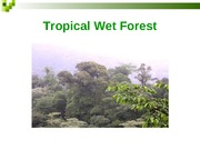 Ecology Wet Forests