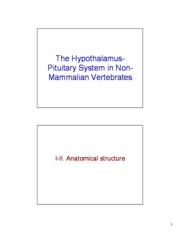 3-Comparative%20Hypothalamus-pituitary[1]