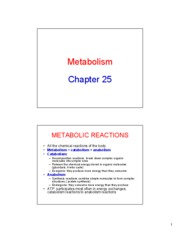 Chapter 25 Metabolism Lecture Notes