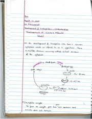 Development of Drosophila Notes