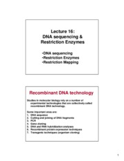 LS16Restrictionenzyme