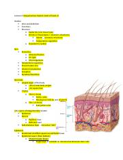 Lecture 6 Integumentary System.docx