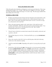 Fetal Pig Dissection Guide for email