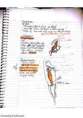 EXS3315 Hip Flexors Notes