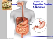 CH 14: The Digestive System and Nutrition