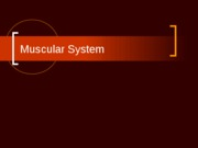 Ch. 11 Muscular System