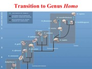 Week 13 - Transition to Homo