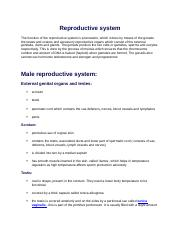 Reproductive system.docx