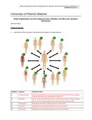 Body Organization and the Integumentary, Skeletal, and Muscular Systems Worksheet.doc