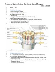 Anatomy Notes- spinal cord and spinal nerves