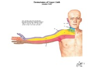 Upper_Extremity_Overview