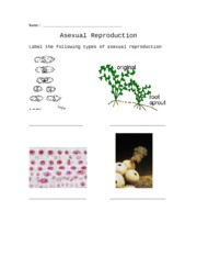 Asexual Reproduction worksheet