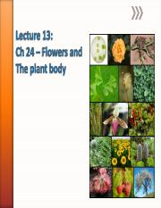 Lecture 13_Ch24_PlantBody_Moody.pdf