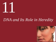 Ch11-DNA and its Role in Heridity