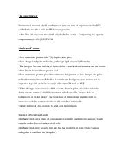 Chapter 10 Notes The Lipid Bilayer .docx