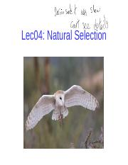 Lec04 Natural Selection post-1.pptx