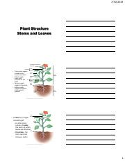 24 - Plant Structure - Stems and Leaves.pdf