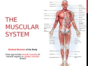 3 Muscular & Circulatory Systems