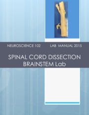 3 Spinal Brainstem Lab
