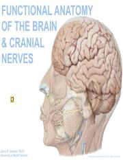 Brain and Crainial Nerves (2) .pdf