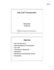 Lecture 15 hair cells