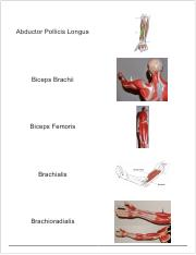 Muscle flashcards.pdf