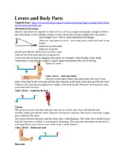 Levers & Body Parts HW