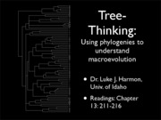 lecture 3 phylogenetics and macroevolution