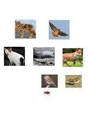 feral cats food web.docx