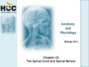 Chapter_13_Spinal_Cord