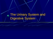 Lab 9 - Urinary System, Digestive System