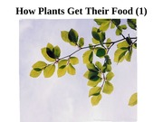 how-plants-get-food