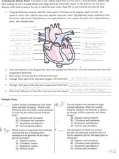 Analyzing the Human Heart quiz