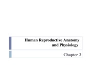 Ch. 2 - Reproductive Anatomy & Physiology