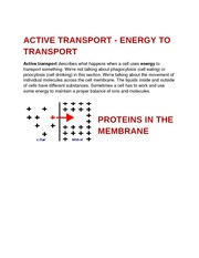 Active Transport - Energy to Transport