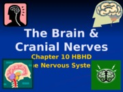 The Brain & Cranial Nerves.ppt