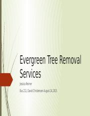 Evergreen Tree Removal Services Business